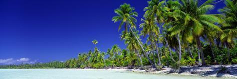 Beach with Palm Trees, Bora Bora, Tahiti Photographic Print