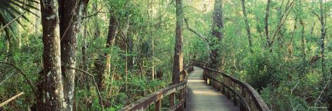 Boardwalk at Big Cypress Bend, Fakahatchee Strand State Preserve, Florida, USA Photographic Print