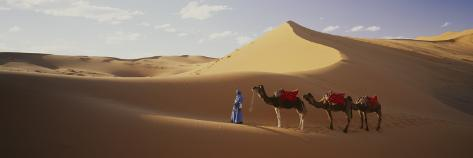 Camels in Desert Morocco Africa Wall Decal