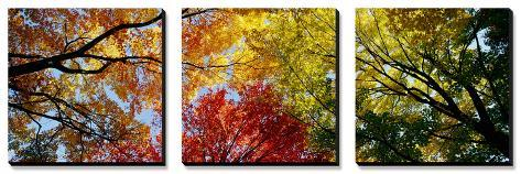 Colorful Trees in Fall, Autumn, Low Angle View Canvas Art Set
