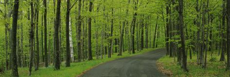 Empty Road Passing through a Forest, Peninsula State Park, Door County, Wisconsin, USA Photographic Print