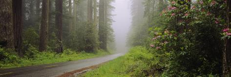 Empty Road Passing through a Forest, Redwood National Park, California, USA Photographic Print