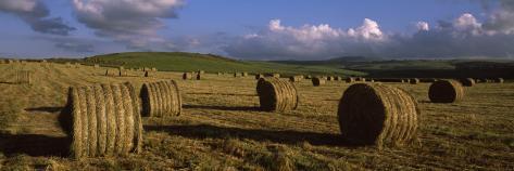 Hay Bales in a Field, Underberg, Kwazulu-Natal, South Africa Photographic Print