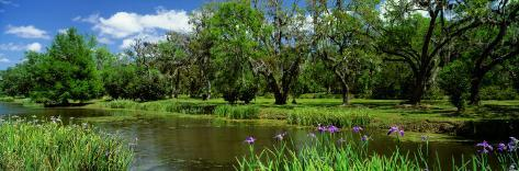 Jungle Gardens, Avery Island, Southern, Louisiana, USA Photographic Print