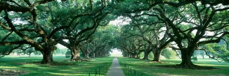 Louisiana, New Orleans, Brick Path Through Alley of Oak Trees Photographic Print
