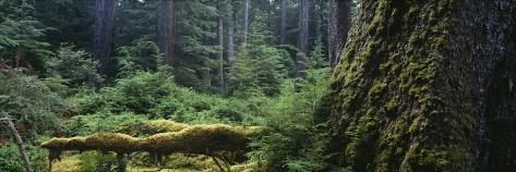 Moss on a Tree Trunk, British Columbia, Canada Photographic Print