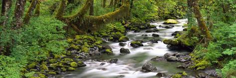 Olympic National Park, Washington State, USA Photographic Print