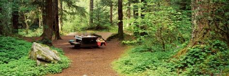 Picnic Table in the Forest, Salmon-Huckleberry Wilderness, Oregon, USA Photographic Print