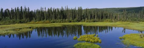 Reflection of Trees in a Pond, British Columbia, Canada Photographic Print