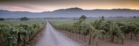 Road in a Vineyard, Napa Valley, California, USA Photographic Print