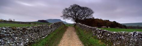 Stone Walls Along a Path, Yorkshire Dales, England, United Kingdom Photographic Print