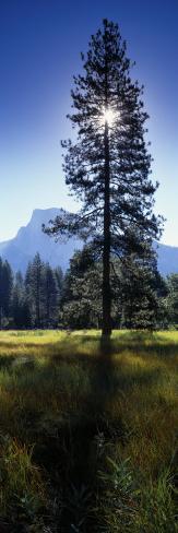 Sun Behind Pine Tree, Half Dome, Yosemite Valley, California, USA Photographic Print