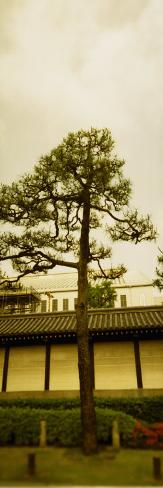 Tree in Front of a Temple, Nishi Honganji Temple, Kyoto Prefecture, Japan Photographic Print