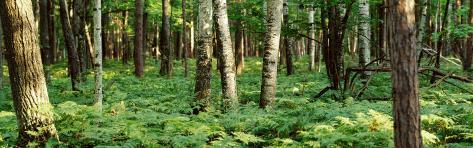 Trees, Forest Floor Photographic Print