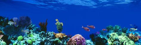 Underwater, Caribbean Sea Photographic Print