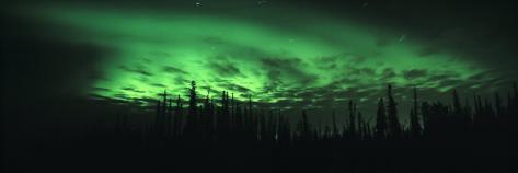 View of the Northern Lights, Aurora Borealis, Fairbanks, Alaska, USA Photographic Print