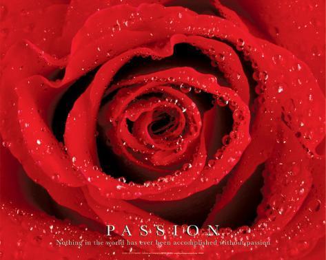 Passion - Rose Mini Poster