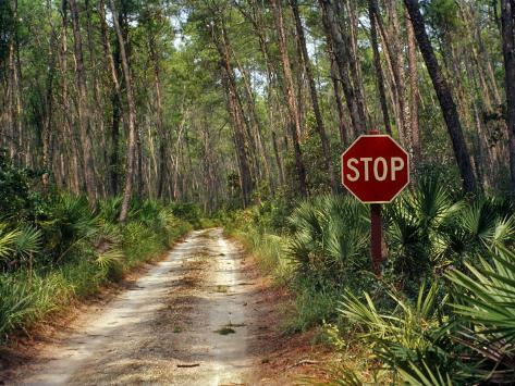 Central Florida, Stop Sign, Ocala Forest Road Photographic Print
