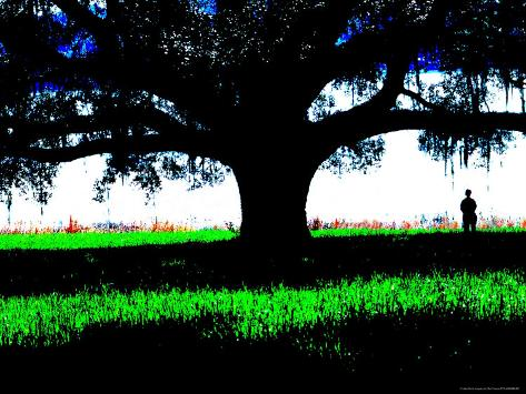 Figure Standing Under a Tree, North Florida Photographic Print
