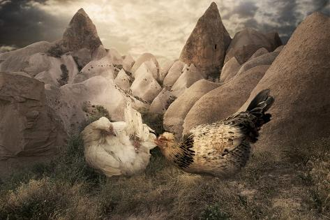 Chickens in Spring Photographic Print