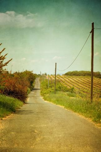 Vineyard with Telephone Polled at Road Valokuvavedos