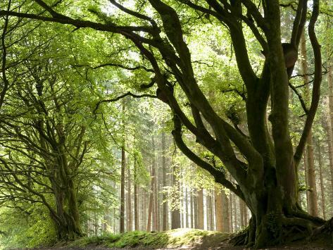 Αποτέλεσμα εικόνας για northumberland forests