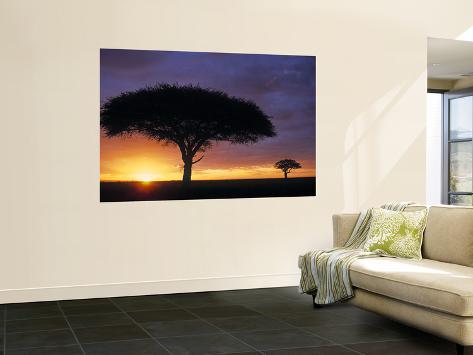 Acacia Tree at Sunrise, Serengeti National Park, Tanzania Giant Art Print