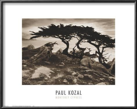 Monterey Cypress Framed Art Print