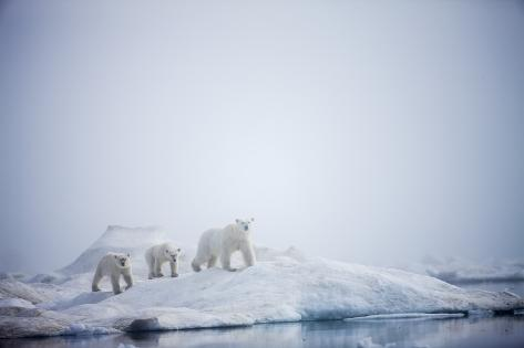 Polar Hudson/76 FQBHUYQ0ww