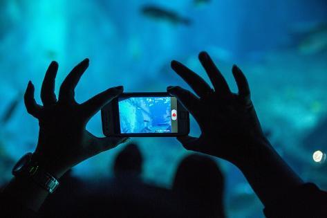 Tourists at S.E.A. Aquarium, Singapore Photographic Print