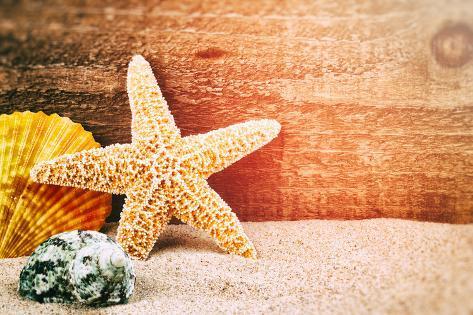オールポスターズの paulgrecaud sea star and shells 写真プリント