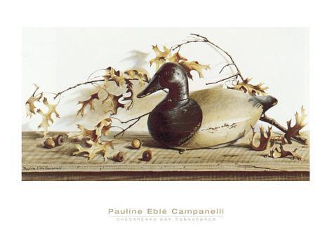 Chesapeake Bay Canvasback Prints by Pauline Eblé Campanelli ...