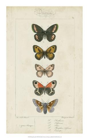 Pauquet Butterflies VI Giclee Print