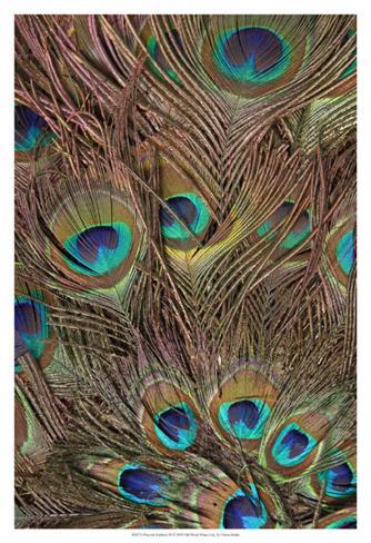 Peacock Feathers III Art Print