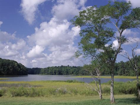 Indian Field Creek, on Colonial Highway, Near Williamsburg, Virginia, USA Photographic Print