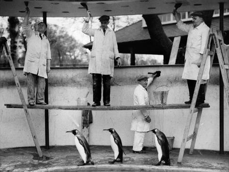 Penguins Decoration Photographic Print