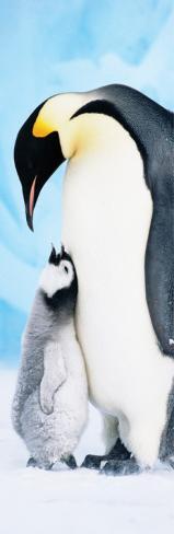 Penguins Poster