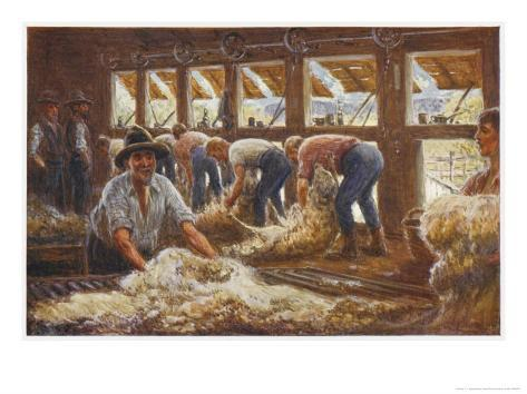 In an Australian Sheep Shearing Shed Giclee Print