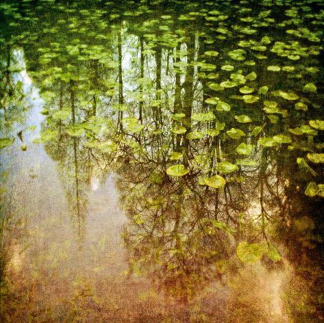 Lily Pond Giclee Print