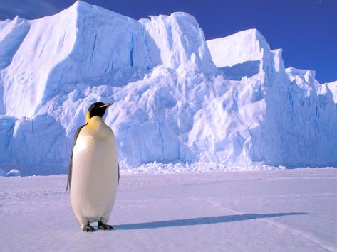Emperor Penguins, Cape Darnley, Australian Antarctic Territory, Antarctica Photographic Print