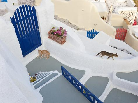 Cats, Oia, Santorini, Cyclades Islands, Greece Photographic Print