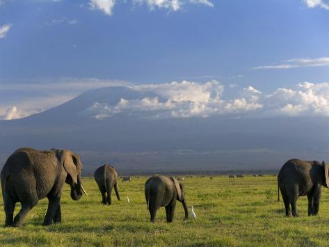 Elephant, Mt. Kilimanjaro, Masai Mara National Park, Kenya Photographic Print