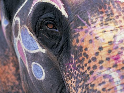 Goa, India, Close-up of Elephants Eye Photographic Print