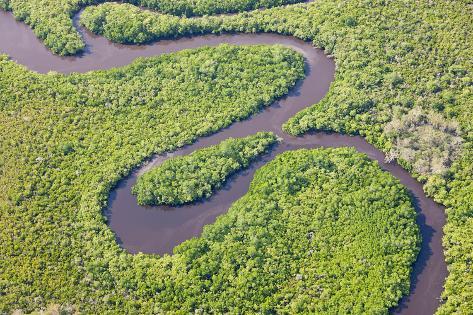 Rainforest, Daintree River, National Park Photographic Print