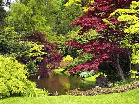 Acer Trees and Pond in Sunshine, Gardens of Villa Melzi, Bellagio, Lake Como, Lombardy, Italy Photographic Print