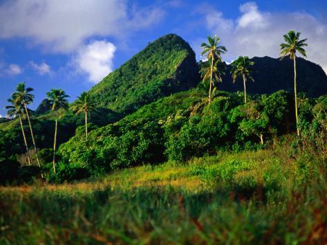 Palm Trees and Dense Jungle Peaks, Rarotonga, Southern Group, Cook Islands Photographic Print
