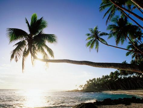Sun Shining Off Water and through Palm Tree at Return to Paradise Beach, Upolu, Samoa Photographic Print