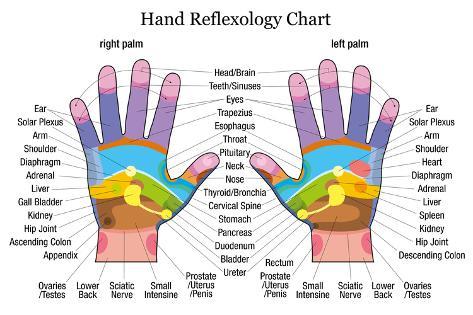 Hand Reflexology Chart Description Lámina