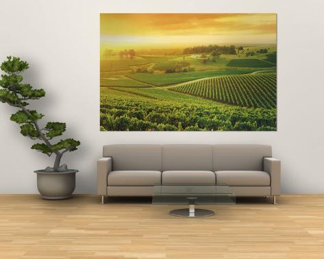 Vineyard, Hunter Valley, Australia Wall Mural