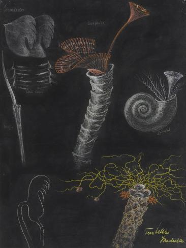 Annelida: Segmented Worms Giclee Print